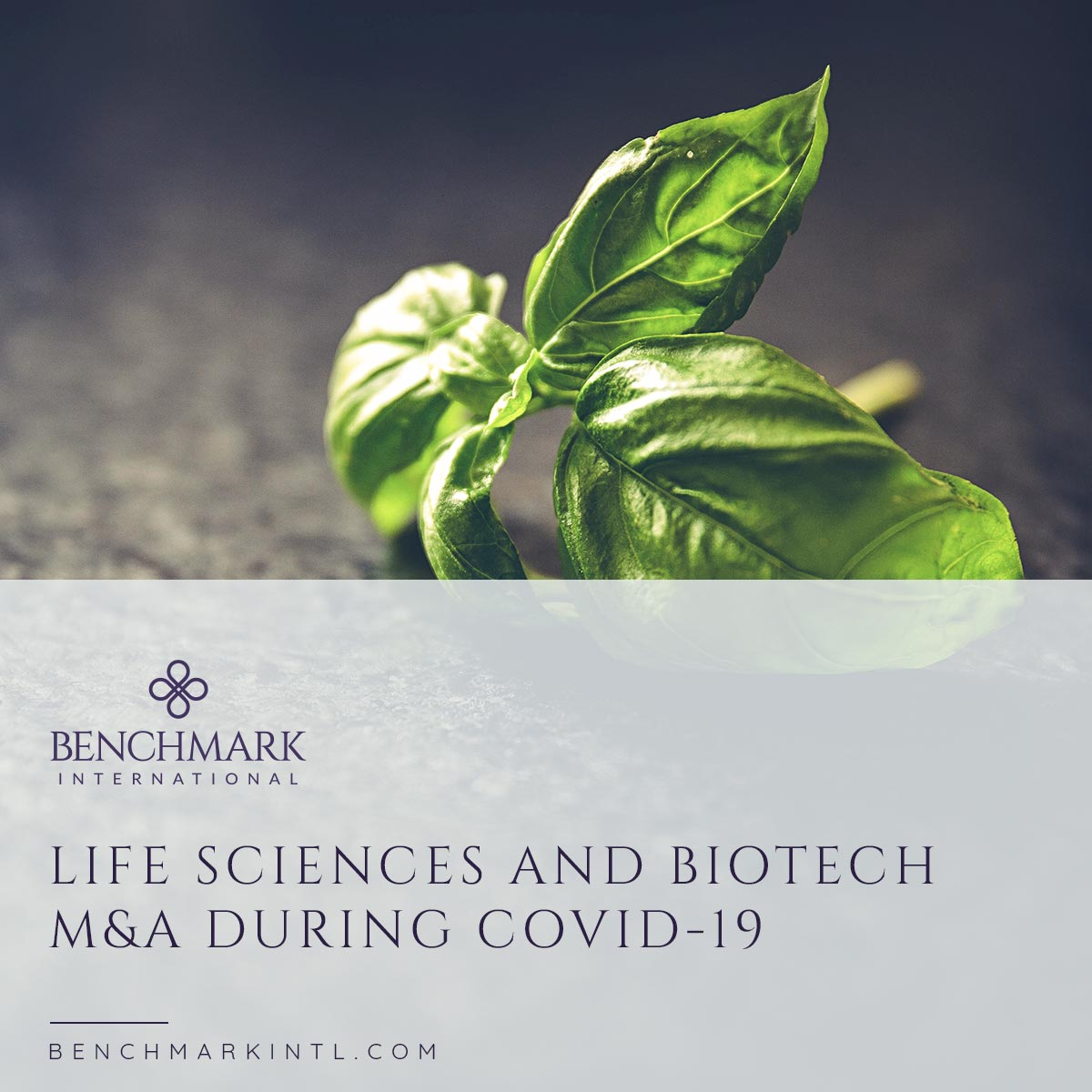 Life_Sciences_and_Biotech_M&A_During_COVID-19_social(4)