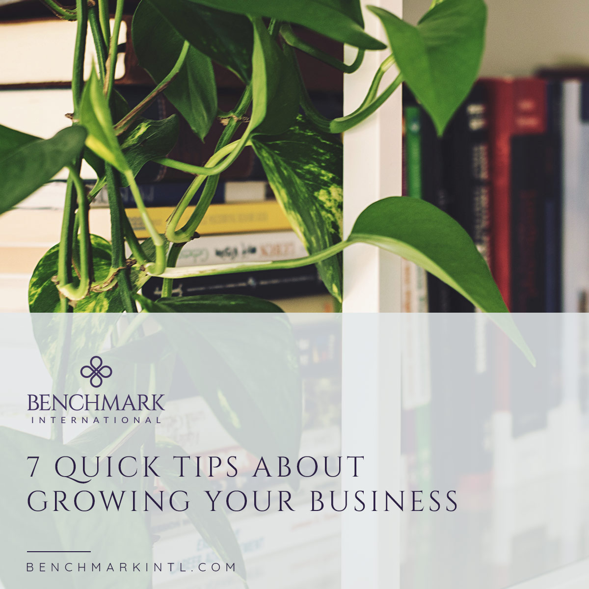 7 Quick Tips About Growing Your Business