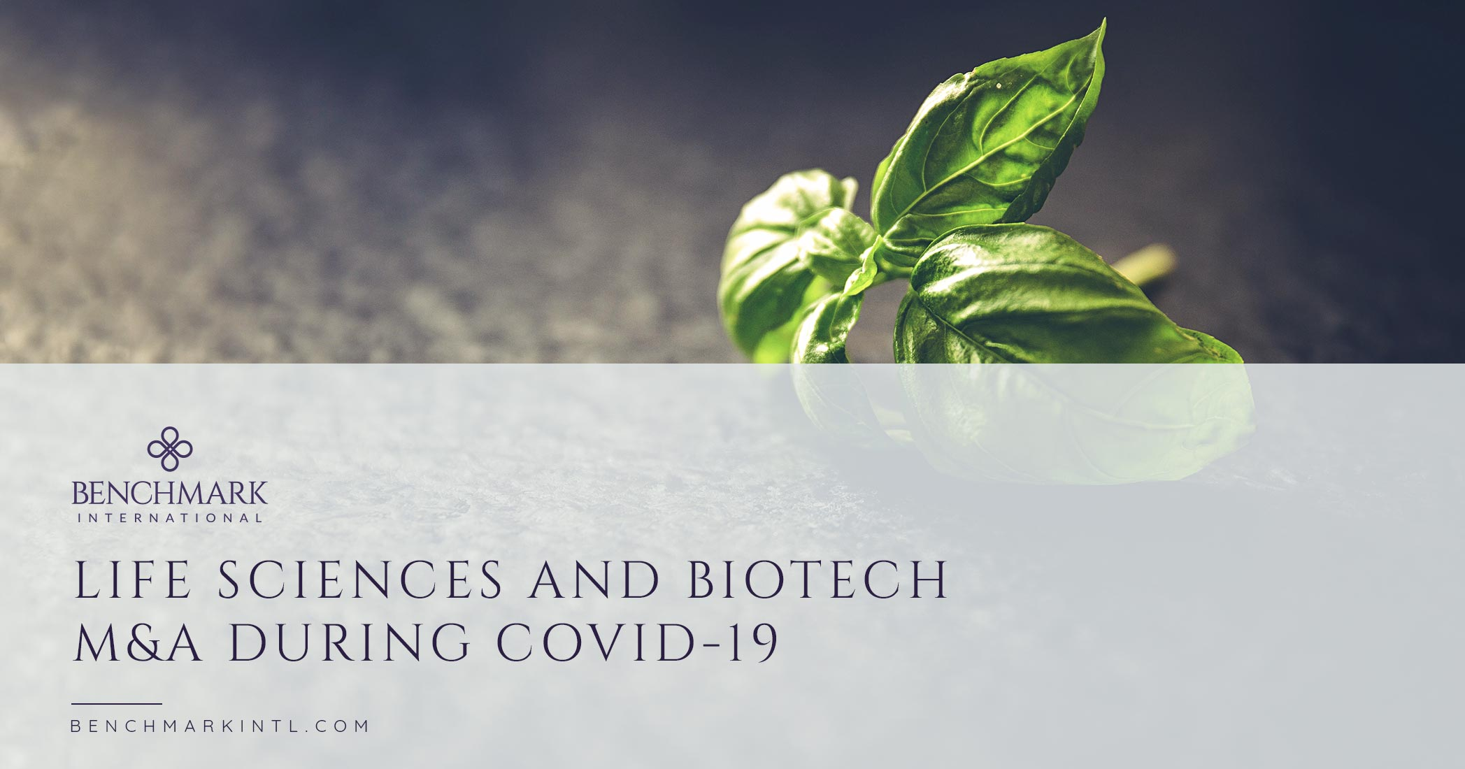 Life Sciences And Biotech M&A During Covid-19